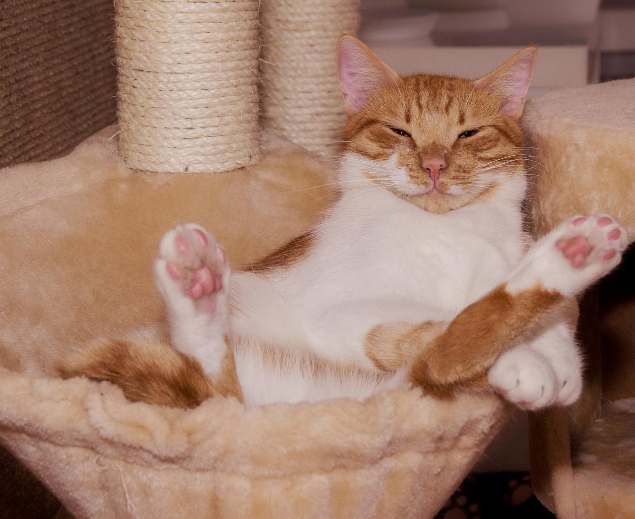 sproščena mačka