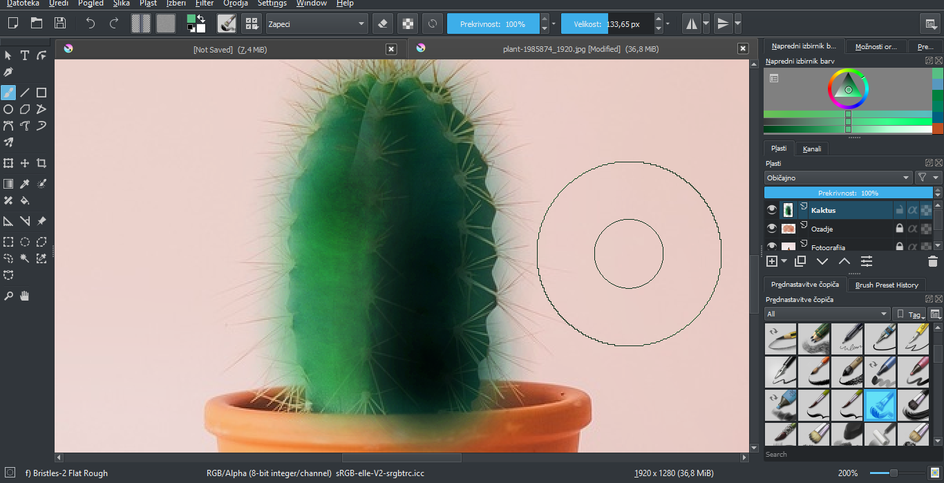 barvni odtenki kaktusa
