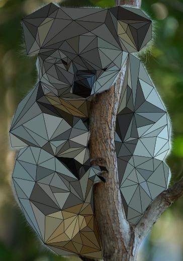 končana koala